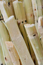 Stack of chipped sugar cane Royalty Free Stock Photos