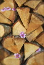 Stack of firewood close up split decorated with pink flowers Royalty Free Stock Images