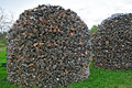 A stack of firewood cut and stacked. Royalty Free Stock Photo