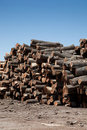 Stack of freshly cut logs Royalty Free Stock Image