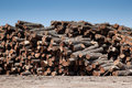 Stack of freshly cut logs Royalty Free Stock Photos
