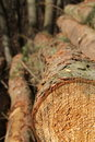Stack of logs Stock Photography