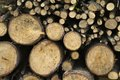 Stack of logs backgrounds details Royalty Free Stock Images