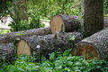 Stack of logs a in the english countryside Stock Photo