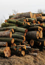 Stack of Lumber Tree Wood Stock Photos