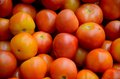 Stack of numerous tomatoes a large number ripe red resting on each other on sale Royalty Free Stock Image