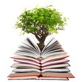 Stack of open books with tree Royalty Free Stock Photo