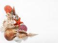 Stack of shells and starfishes Royalty Free Stock Photo