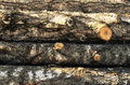 Stack of wood felled birch logs Royalty Free Stock Photo