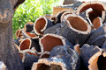 Stacked bark near cork oak in Alentejo, Portugal Royalty Free Stock Photos