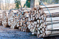 Stacked and cut logs for firewood Stock Photo