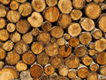 Stacked firewood Stock Image