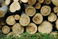 Stacked firewood tree logs Stock Image