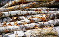 Stacked pile of wood during summer Royalty Free Stock Photos