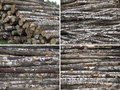 Stacked pilesbirch with different views Stock Photo