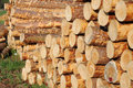 Stacked timber logs Royalty Free Stock Photos