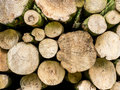 Stacked tree trunks in the forest Royalty Free Stock Photo