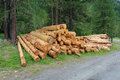 Stacked tree trunks Royalty Free Stock Photo