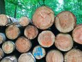 Stacked tree trunks Royalty Free Stock Photo