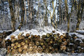 Stacked tree wood logs at winter forest Royalty Free Stock Photo