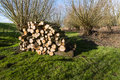 Stacked Wood In A Dutch Nature...