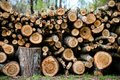 Stacked Wood Logs With Pine Trees Royalty Free Stock Photo