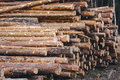 Stacked wood pine timber for construction buildings Royalty Free Stock Photo