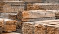 Stacked wood spruce and pine timber Royalty Free Stock Photo
