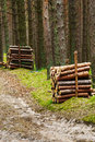 Stacks of felled pine tree trunk logs in evergreen coniferous forest. Royalty Free Stock Photo