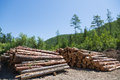 Stacks of logs at a forest logging site on sunny day Royalty Free Stock Photos