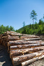 Stacks of logs at a forest logging site on sunny day Stock Photos