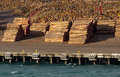 Stacks of tree trunks ready for export by sea piles cut logs and on wharf wellington harbour in new zealand Stock Photo
