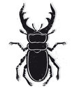 Stag beetle illustration of a male isolated on white background Royalty Free Stock Image
