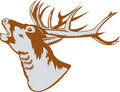 Stag deer head roaring Royalty Free Stock Image