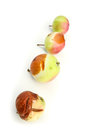 Stages of decay a rotting apple Royalty Free Stock Image