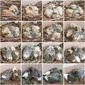 Stages  growth of chicks pigeons Royalty Free Stock Photo