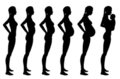 Stages of pregnancy of the woman Stock Photo