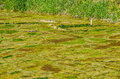 Camouflaged Stagnant Water Royalty Free Stock Photo