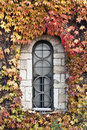 Stained-glass window in a wall covered by ivy Royalty Free Stock Photos