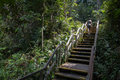 Stair Climbing at Macritchie Royalty Free Stock Photo