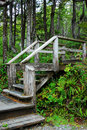 Stair in rain forest Royalty Free Stock Photos