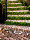 Staircase greenery Stock Images