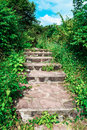 Stairs cluttered with plants in forest Royalty Free Stock Images