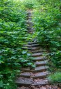 stairs covered with vegetation Royalty Free Stock Photo