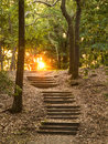 Stairs through forest going up hillside in toward sunset Stock Photography