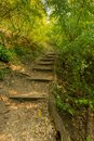 Stairs in the forest, nice colors, trees and grass in autumn, magical soft colors Royalty Free Stock Photo