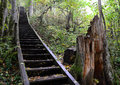 Stairs in the forest Royalty Free Stock Photo