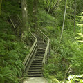 Stairs large wooden in the green forest Royalty Free Stock Photography