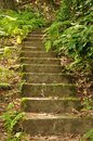 Stairs in the nature near rathen Royalty Free Stock Photography