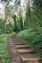 Stairs in a park Stock Image